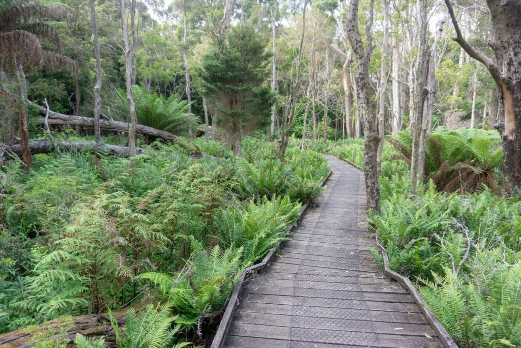 the Boardwalk on Lilly Pilly circuit