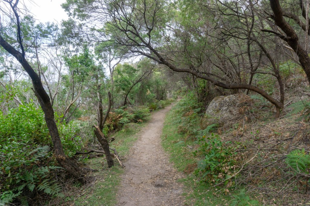 Lilly Pilly Nature Walk