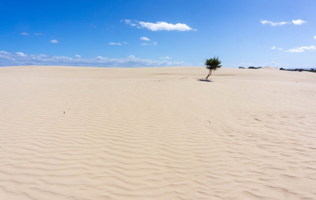 a tree amongst the expansive sand dunes