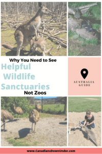wildlife sanctuaries are better than zoos