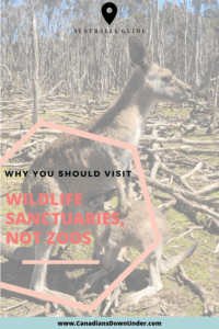 visit animal sanctuaries not zoos