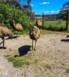 wildlife sanctuaries house emus too