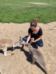 Hand feeding roos at wildlife sanctuaries